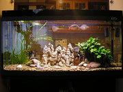 Профессиональное обслуживание аквариумов