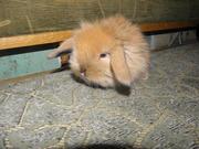 Декоративные кролики,  клетки для кроликов