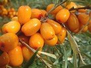 Облепиховое масло (фарм субстанция)