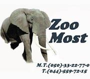 ZooMost интернет зоомагазин по продаже товаров для животных