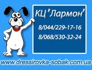 Гостиница для собак. Киев.