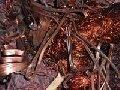 Куплю лом и отходы цветных металлов. Дорого.067-937-81-66