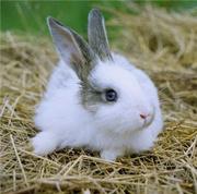 Продам кроликов. Цена договорная.