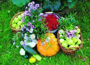 Табачная пыль (инсектицид),  защита сада и огорода от вредителей и боле