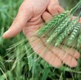 Гербициды,  фунгициды,  инсектициды,  десиканты,  регуляторы роста,