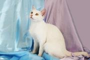Кошка-альбинос ищет дом!