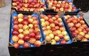 Компания KMG Group - фрукты и овощи из Польши оптом