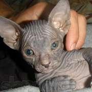 Милые и добрые котята