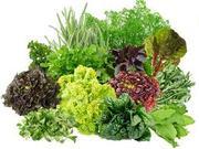 Овощи.фрукты. Продам зелень оптом