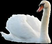 Предлагаем декоративных птиц для украшения частных угодий