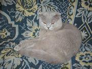 Котик приглашает на ВЯЗКУ!
