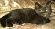 Котенок - ласковая девочка ищет семью