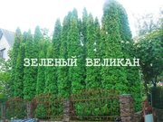 Вечнозеленая живая изгородь - 100% зеленое бетонное ограждение.