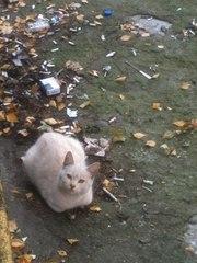 Спасите котёнка,  подарите ему дом!!