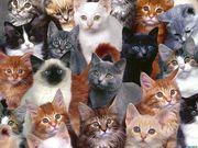 У Вас есть кошка или кот необычной породы? Приглашаем на съемки!