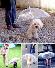 Защитный зонт от дождя для собаки
