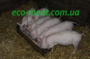 Домашня свинина з домашньої ферми