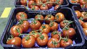 подаем томаты