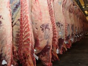 продам мясо говядины халяль