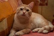 Открой душу добру- усынови кота из МИНИПРИЮТА-11 котов и кошек