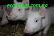 Продам домашнюю свежую свинину на постоянной основе.