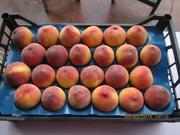 прямые поставки персиков и нектарин из Турции