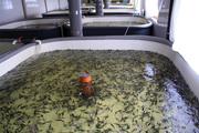 Выращивание рыб