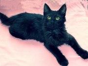 Срочно котенок мальчик Ларс в хорошие руки бесплатно!