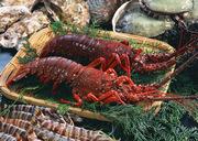 Морепродукты высокого качества от Торгового Дома Балтика