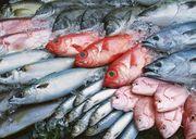 Рыба свежемороженая для переработки и столовые сорта оптом