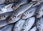 Рыба морская свежемороженая оптом