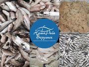 Бычки и тюлька азово-черноморские свежемороженые оптом