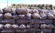 Картофель напрямую от фермерских хозяйств.