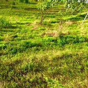 участок земля киевская область Лесники
