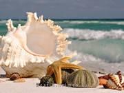 Майские праздники. Отдых на майские у Черного моря.