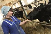 Молочная ферма продаст фермерское молоко