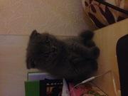 Срочно продам котёнка!!!