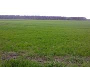 Продаётся земельный участок в Путровке Васильковского района.