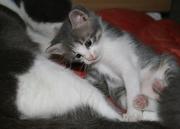 Милейшие котята ищут хозяев!