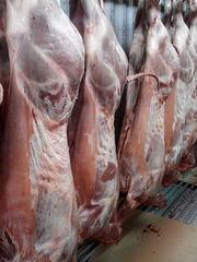 Продам свежайшее мясо халяль баранину тушками