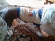 Вязаная жилетка для собачки кошечки