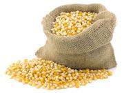 Закупаем зерновые и масличные культуры оптом