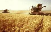 экспорт зерновых , зернобобовых,  масличных и других культур в страны ЕС