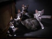 Трое ласковых малышей ищут свой дом!