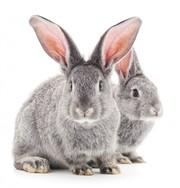 Комбікорм для кролів К 91-1
