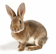 Комбікорм для кролів К 91-1 (від 30 до 60 днів)