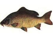 Комбікорм для риби К 111-3