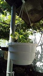 Горшки для цветов подвесные (оптом) из Польши