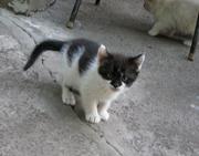 Котята 1, 5 месяца ищут свой дом