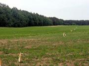 участок с генпланом 22 гектар Киев область Бышев хозяин